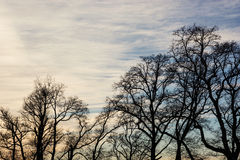 Winter treetops and sunset Stock Photography