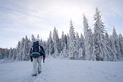 Winter trekking. In wild scenery during beautiful day royalty free stock photo
