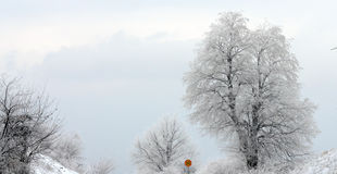 Winter trree und 50kmh HöchstgeschwindigkeitsVerkehrsschild Lizenzfreies Stockfoto