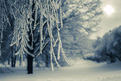 Winter in Tsaritsyno Park. Trees with snow in Tsaritsyno Park 2013 Stock Images