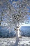 Winter in Tutzing auf See Starnberg, Deutschland stockfotografie