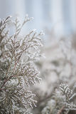Winter twigs and grass Stock Image