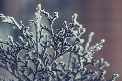 Winter twigs and grass Royalty Free Stock Images