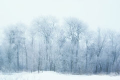 Winter twigs and grass covered with frost and snow Royalty Free Stock Image