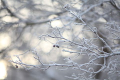 Winter twigs and grass covered with frost and snow Stock Photography