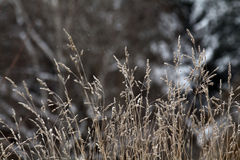 Winter twigs and grass covered with frost and snow Royalty Free Stock Images