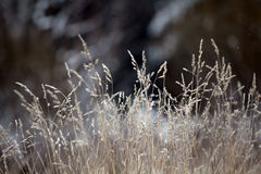 Winter twigs and grass covered with frost and snow Stock Photo