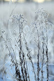Winter twigs and grass covered with frost and snow Stock Image
