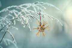 Winter twigs and grass covered with frost and snow Stock Photos