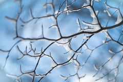 Winter twigs in snow pattern. Winter twigs in snow on blue sky background Royalty Free Stock Images