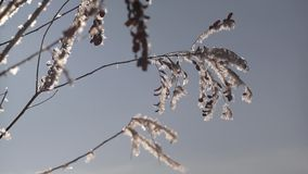 Winter twigs and snowflakes stock video