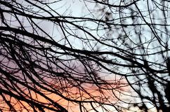Winter twilight colors and leafless tree Branches Silhouettes background. A winter dusk color palette with winter trees. Leafless trees branches silhouettes and royalty free stock image