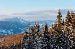 Winter twilight mountain snowy landscape. Evening twilight winter calm mountain landscape with beautiful frosting tree tops Carpathian Mountains, Ukraine Stock Photos