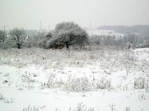 Winter  in Ukraine village Royalty Free Stock Photo