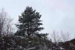 Winter und Bäume Stockbild