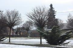Winter und Bäume Stockfotografie