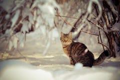 Winter und eine Katze Stockfoto
