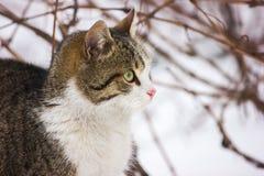 Winter und eine Katze lizenzfreies stockbild