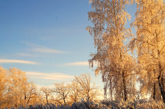 Winter in the Ural Stock Image
