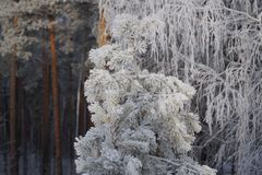 Winter in the Urals Royalty Free Stock Photography