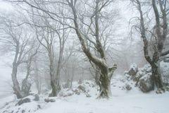 Winter in Urbasa, Navarra Royalty Free Stock Photo