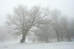 Winter in Urbasa, Navarra Stock Photo