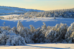 Winter valley. Snowy morning in the winter valley Royalty Free Stock Images
