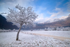 WINTER VALLEY Stock Photography