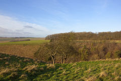 Winter valley with hawthorn trees Stock Photo