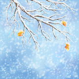 Winter vector snow-covered frost branch background stock illustration