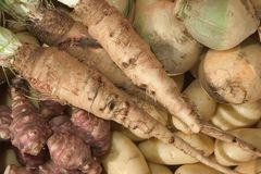 Winter vegetable Stock Photography