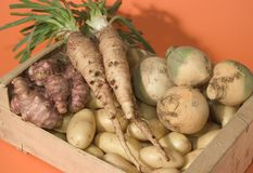 Winter vegetables Royalty Free Stock Photo
