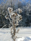 Winter vegetation and bushes, bushes and trees covered with hoarfrost, ice and layers of snow Stock Photography
