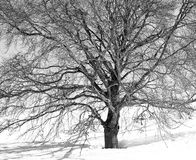 Winter veins Stock Photography
