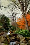 Winter verwelkter Baum in einem Park stockbild