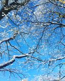 Winter verzweigt sich bluesky wint Lizenzfreies Stockbild