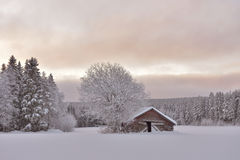 Winter viev. An old barn in the meadow surrounded by forest Royalty Free Stock Photos