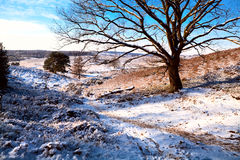 Winter view Royalty Free Stock Photo