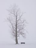 Winter View. A bench and tree stand alone in mid winter stock photography