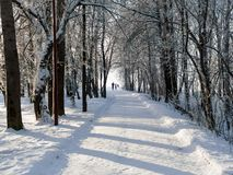 Winter view of alley in the park in big city. stock image