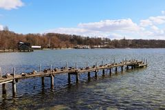 Ammersee Bavarian lake, wooden jetty with mallards. Winter view of Ammersee, Bavarian lake near Munich: coastline and wooden jetty full of mallards crouched on Stock Image