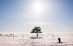 Winter view of empty beach covered with snow, lonely pine tree and shadowy woman walking to the skyline. royalty free stock photo