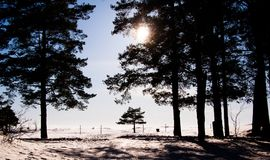 Winter view of empty beach covered with snow, pine trees and sun light through the branches. stock images