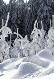 Winter view in the forest. Christmas trees in the snow. Stock Photography