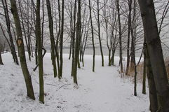 Winter view of forest Royalty Free Stock Photography