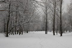 Winter view of forest Royalty Free Stock Photos
