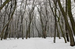 Winter view of forest Stock Photo