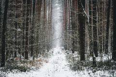 Winter view of forest pathway. Snowy winter forest pathway in the woods Royalty Free Stock Photography