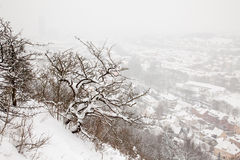 Winter view of Jena Stock Photography