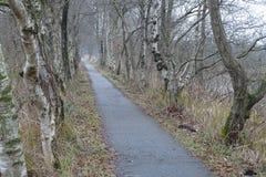 Winter view on Kalenbergerpad birch lane royalty free stock images
